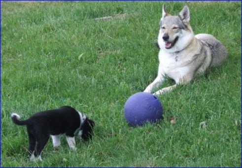 Luna et daika2